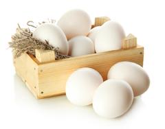 بورصة الحمامي لتجارة البيض